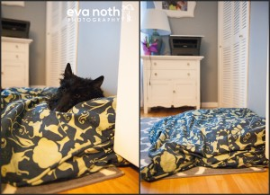 product review - molly mutt duvet covers and dog beds